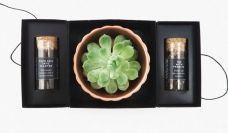 Succulents - Bộ dụng cụ chăm sóc cây kiểng trong nhà